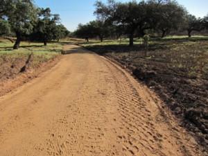 imagen-camino
