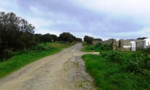 camino en el termino municipal de Jerez